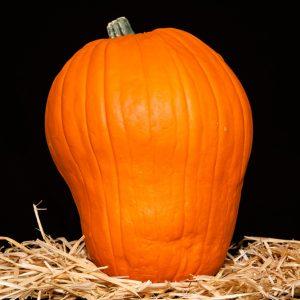 Picture of the orange Skull-Kin